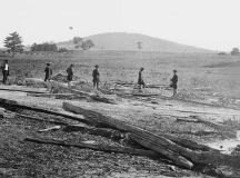 Project to plant trees in memory of Civil War soldiers