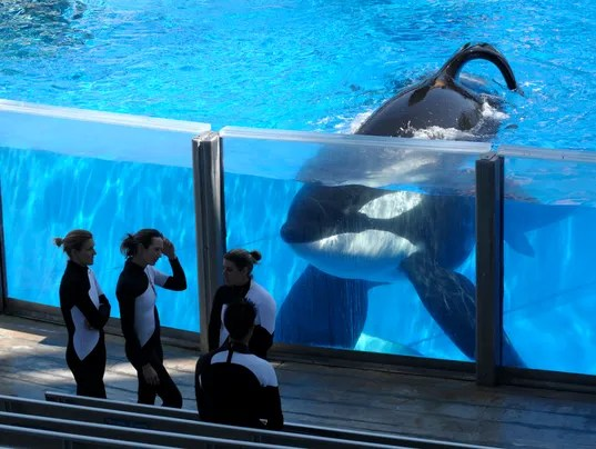 Image result for seaworld controversy 2016