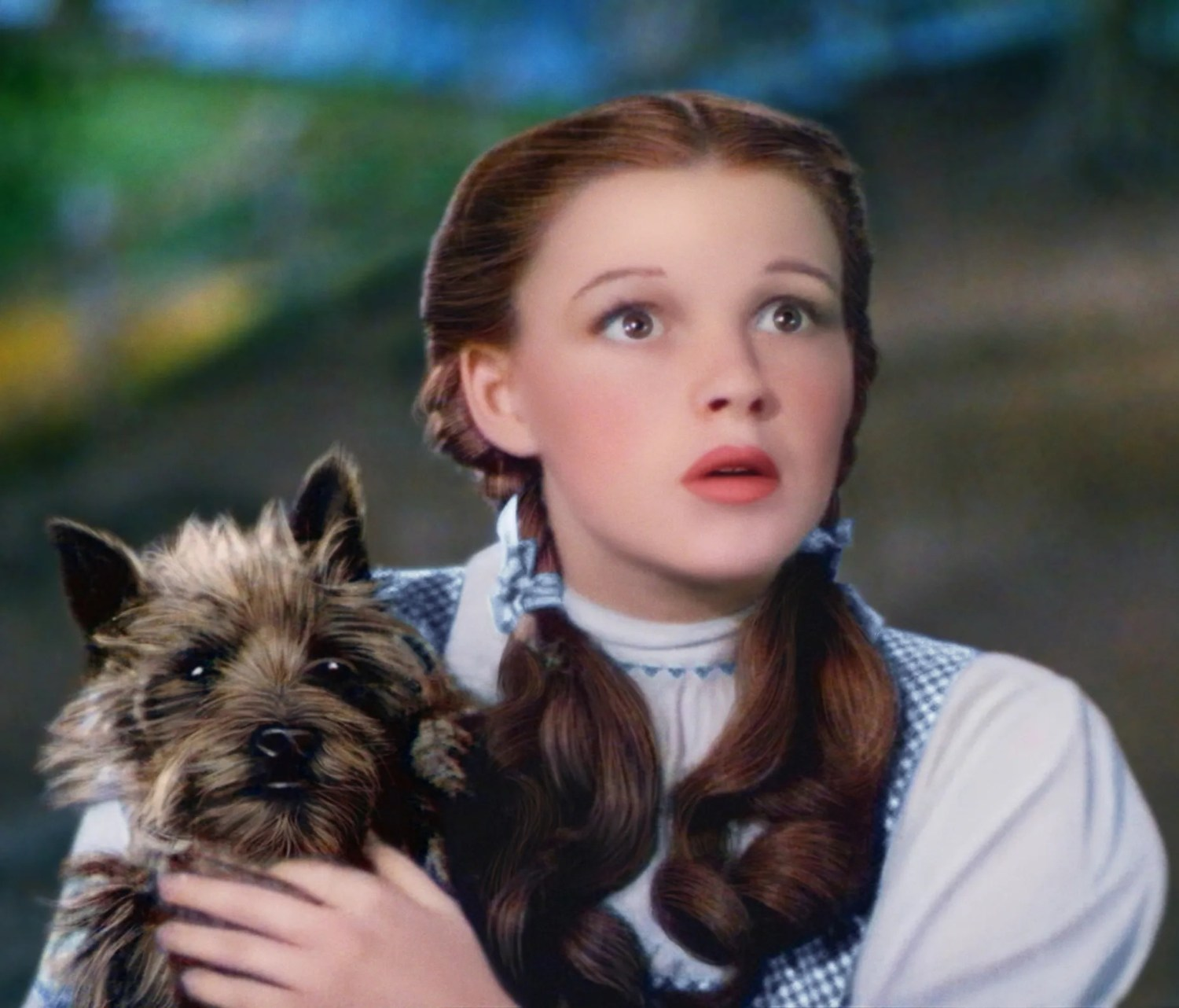 Toto from The Wizard of Oz