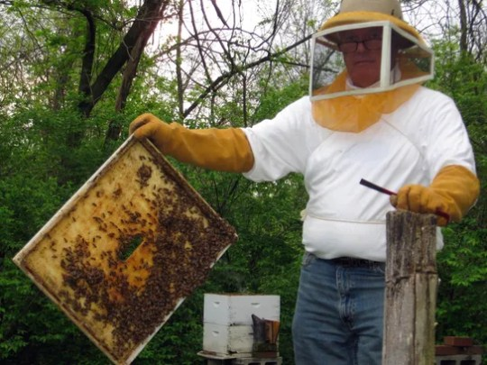 Beekeeper Carl Knochelmann shows off some of his bees.
