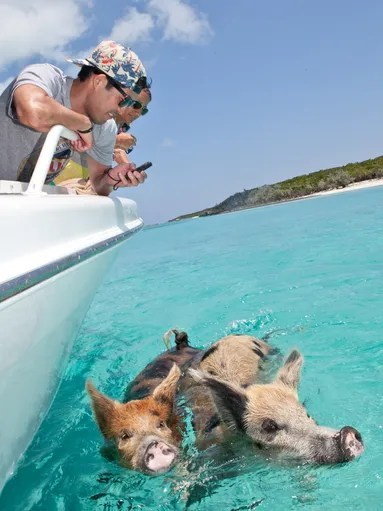 If you're boating near Big Major Cay in the Exuma Cays,
