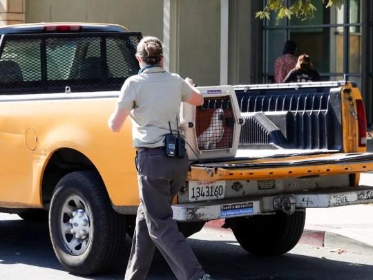 Los Angeles Zoo Mitarbeiter beginnen am Freitag, 9. November 2018, Tiere zu räumen, da Feuer in der Nähe toben.