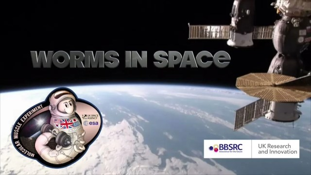 68c2cc98-dc2e-4a58-a7e1-f7b0c15b13cc-worms_in_space SpaceX launch from Florida will have 36,000 worms on board — to study muscle loss