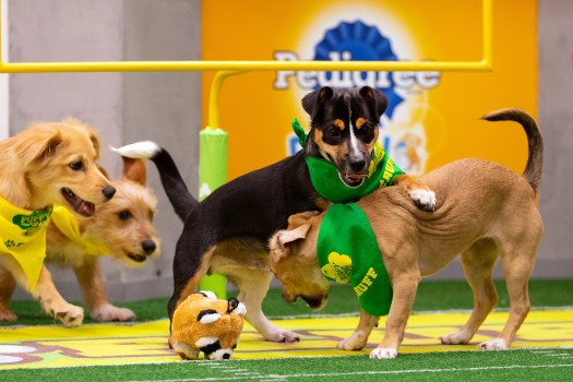 Puppy Bowl 2019: Meet this year's lineup of adorable ...
