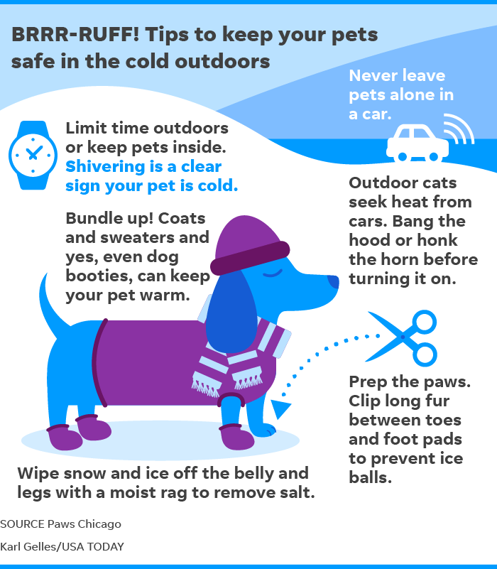 Tips to keep your pets safe in the cold outdoors