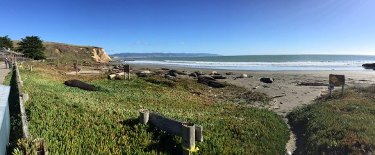 More than 85 elephant seals are currently hanging out atDrakes Beach, a part of thePoint Reyes National Seashore national park in California around 45 minutes north of San Francisco.