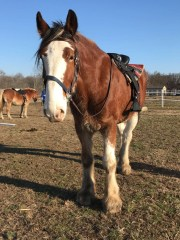 Bubba, City of Delaware, Clydesdale, expires on Wednesday after two rescue by fire drivers.