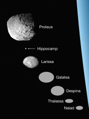 The seven inner moons of Neptune are shown at a consistent set of sizes, along with Neptune (right).