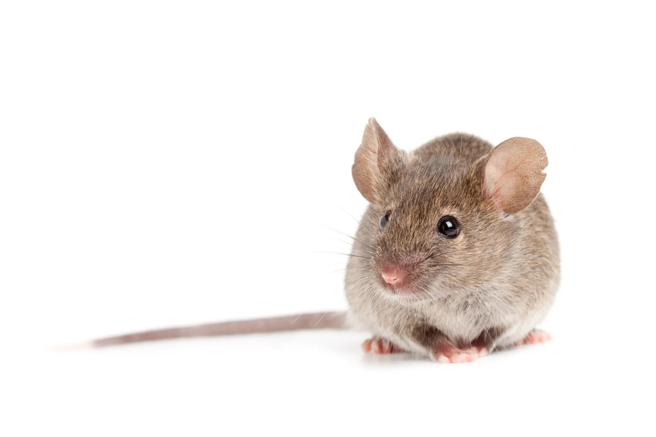 Washoe County reports first case of hantavirus since 2017