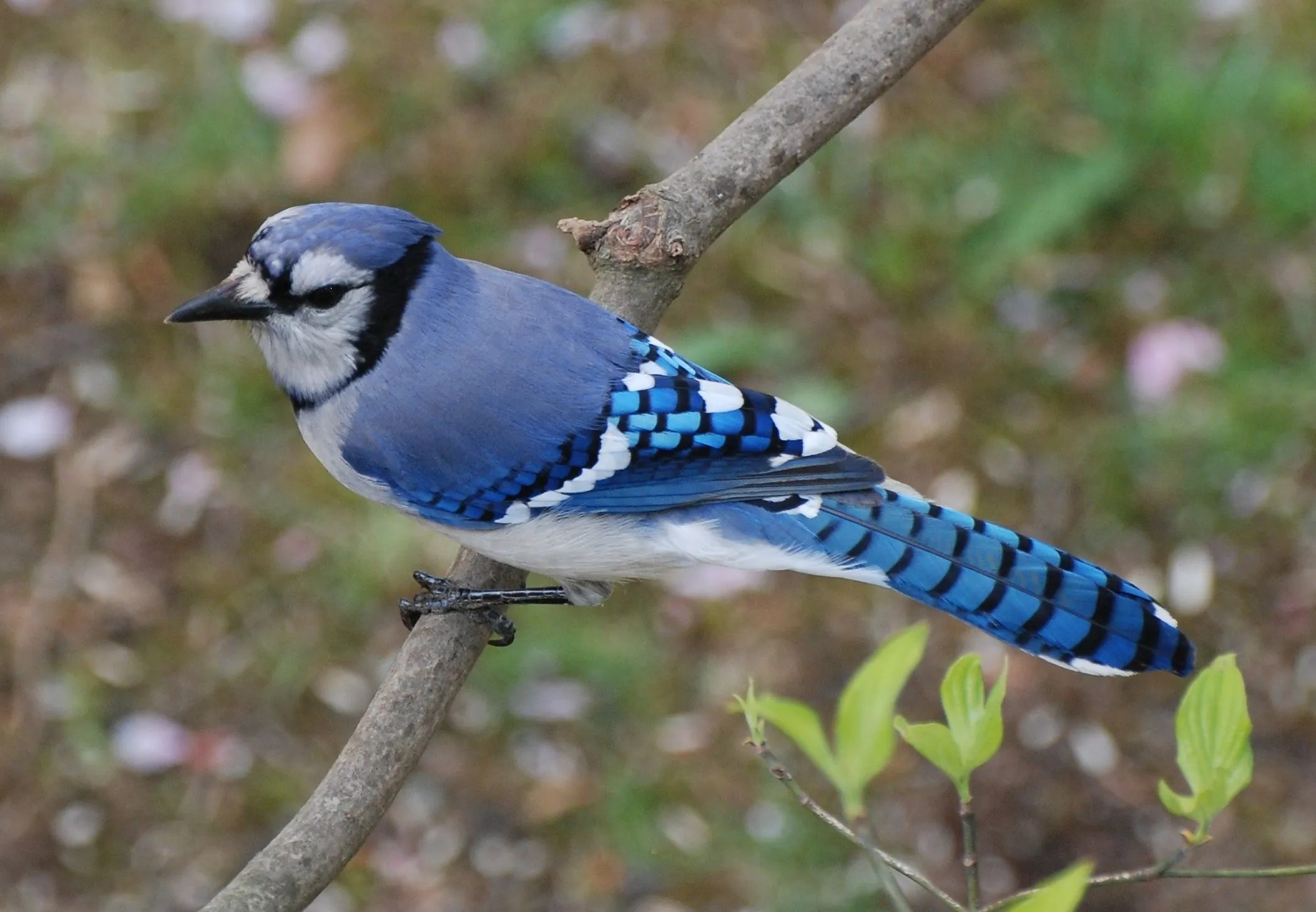 bird watching here s