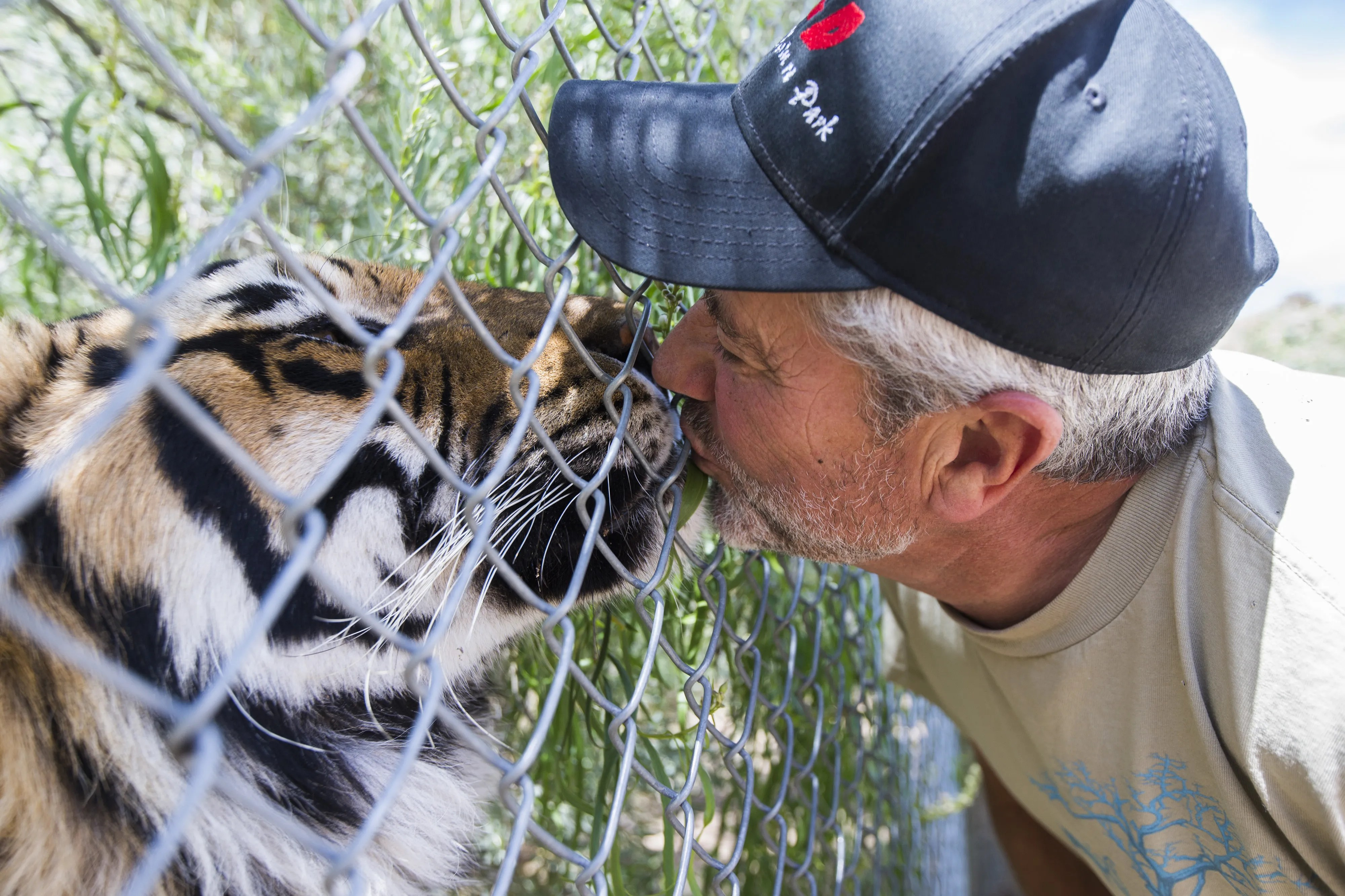 tiger attacks executive director