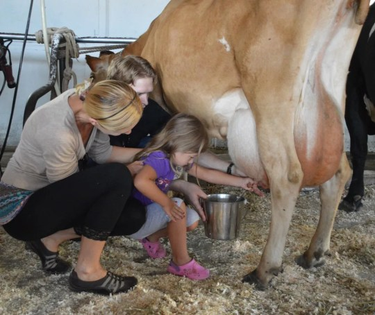 A Farm Stay USA experience: milking cows at Hullo Farms in Durham, New York