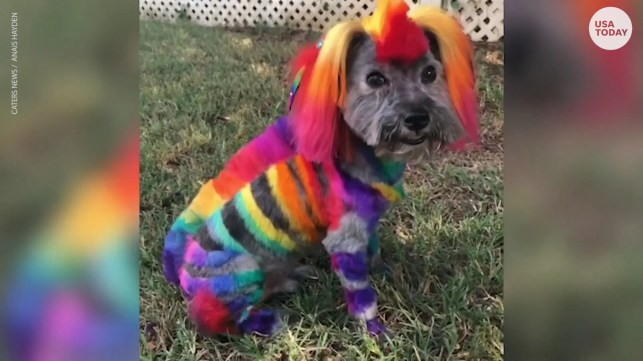 Dog groomer Anais Hayden spends up to 5 hours transforming dogs into mystical creatures