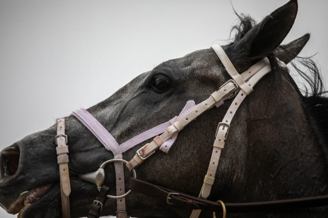 Horse racing deaths mount as states spend billions to keep tracks alive