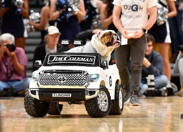 Jan. 8: Georgetown mascot Jack the Bulldog rides in a car against St. John's.