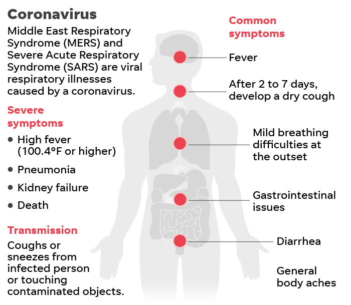 Coronavirus: Pangolin may be virus host; WHO says virus numbers drop