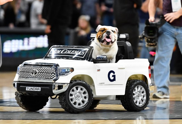 Feb. 8: Georgetown Hoyas mascot Jack the Bulldog on the court during the game against the DePaul Blue Demons.
