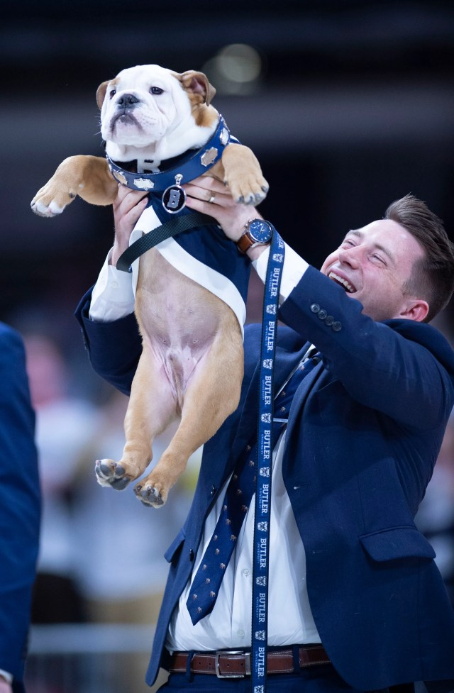 Feb. 29: The new Butler Bulldogs mascot, Butler Blue, is introduced before the game against the DePaul Blue Demons.