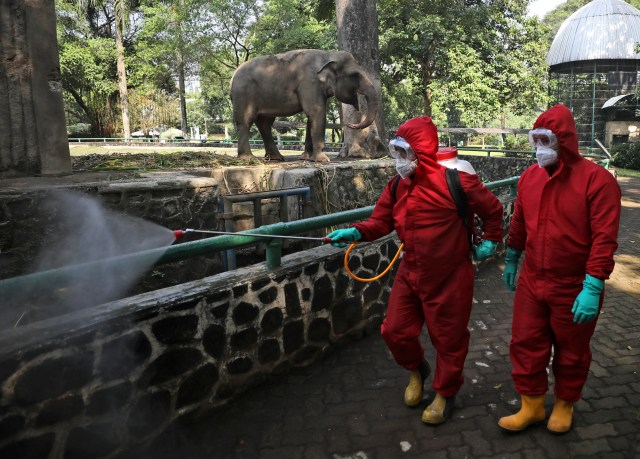 Indonesian firefighters spray disinfectant at the public area near an elephant enclosure at Ragunan Zoo prior to its reopening this weekend after weeks of closure due to the large-scale restrictions imposed to help curb the new coronavirus outbreak, in Jakarta, Indonesia, June 17, 2020. As Indonesia's overall virus caseload continues to rise, the capital city has moved to restore normalcy by lifting some restrictions, saying that the spread of the virus in the city of 11 million has slowed after peaking in mid-April.