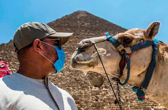 A mask-clad camel guide stands before a camel near the Great Pyramid of Khufu at the Giza Pyramids necropolis on the southwestern outskirts of the Egyptian capital Cairo on July 1, 2020 as the archaeological site reopens while the country eases restrictions put in place due to the COVID-19 coronavirus pandemic.