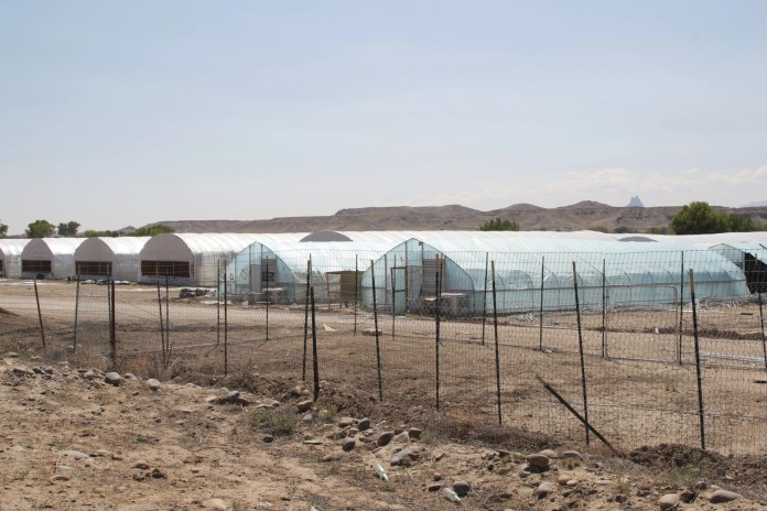 Greenhouses are pictured on Sept. 23 at a hemp farm on Mesa Farm Road in Shiprock. The Navajo Police Department continues to enforce a court order to stop the cultivation of the plant.
