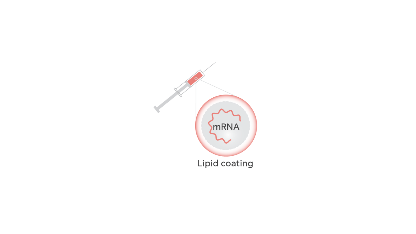 In a vaccine, the messenger RNA or mRNA is protected by a lipid coating, like a fat bubble.