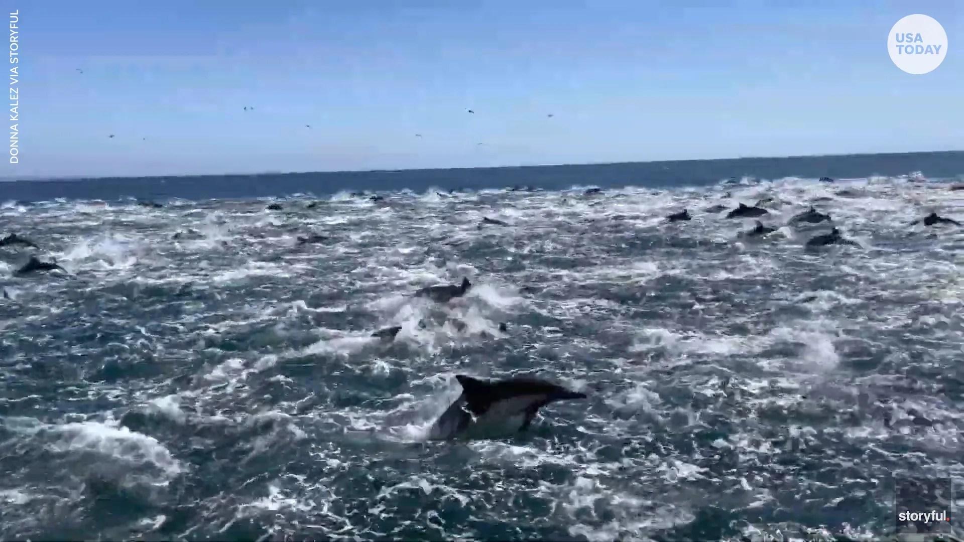 Dolphin 'super pod' races off California coast