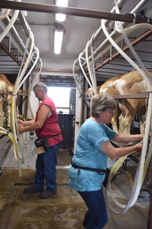 The couple enjoys the time they spend together milking the goats.