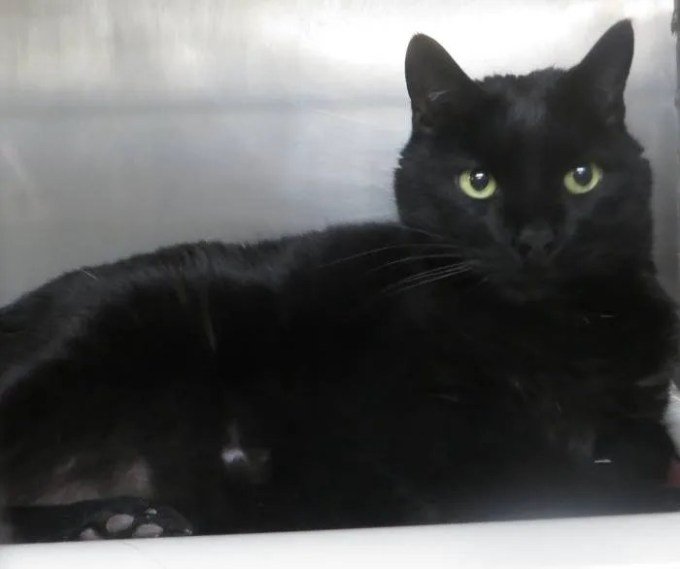 The Taunton Shelter Pet Of The Week Is Celeste