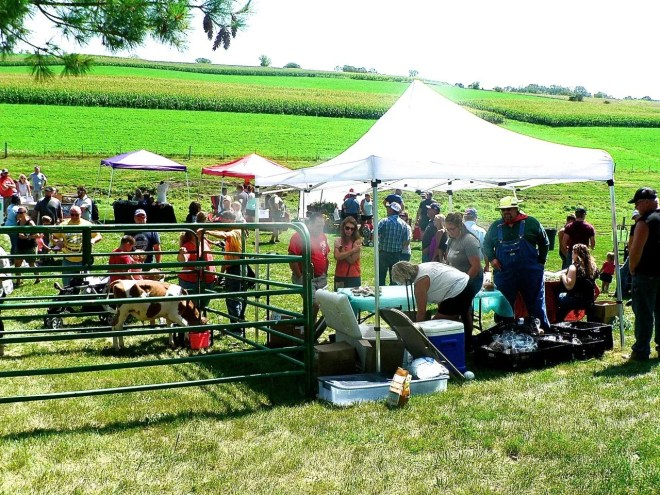 Visitors at Family Day on the Farm petted calves and bought cheese.
