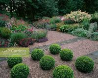 GAP Gardens - Buxus - Box topiary balls in gravel with ...