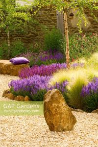 GAP Gardens - Dry garden with gravel, rocks and purple ...