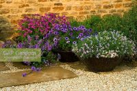 GAP Gardens - Containers in gravel garden planted with ...