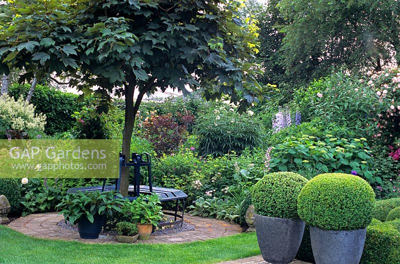 GAP Gardens Metal Tree Seat In Small Garden With Clipped Evergreen Shrubs In Containers