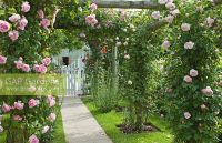 Climbing Rose Pergola - Garden Design Ideas
