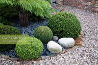 GAP Gardens - Ornamental gravel garden with clipped Buxus ...