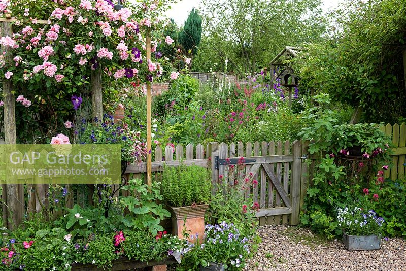 GAP Gardens  A cottage garden with wooden picket fence and pergola covered with climbing Rosa