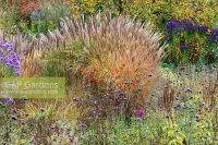 GAP Gardens - A gravel garden planted with Chrysanthemum ...
