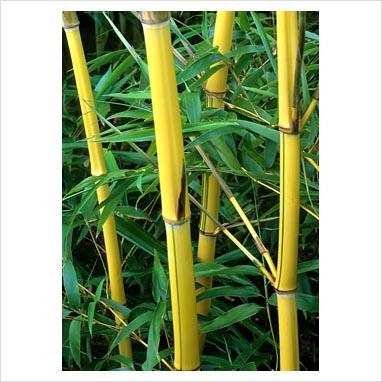 tumbuhan mistis, misteri tumbuhan penolak sihir, zat pencegah datanngnya mahluk halus