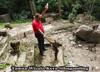 Memajukan Taman Wisata Kera Sibaganding bersama Widy Holidays