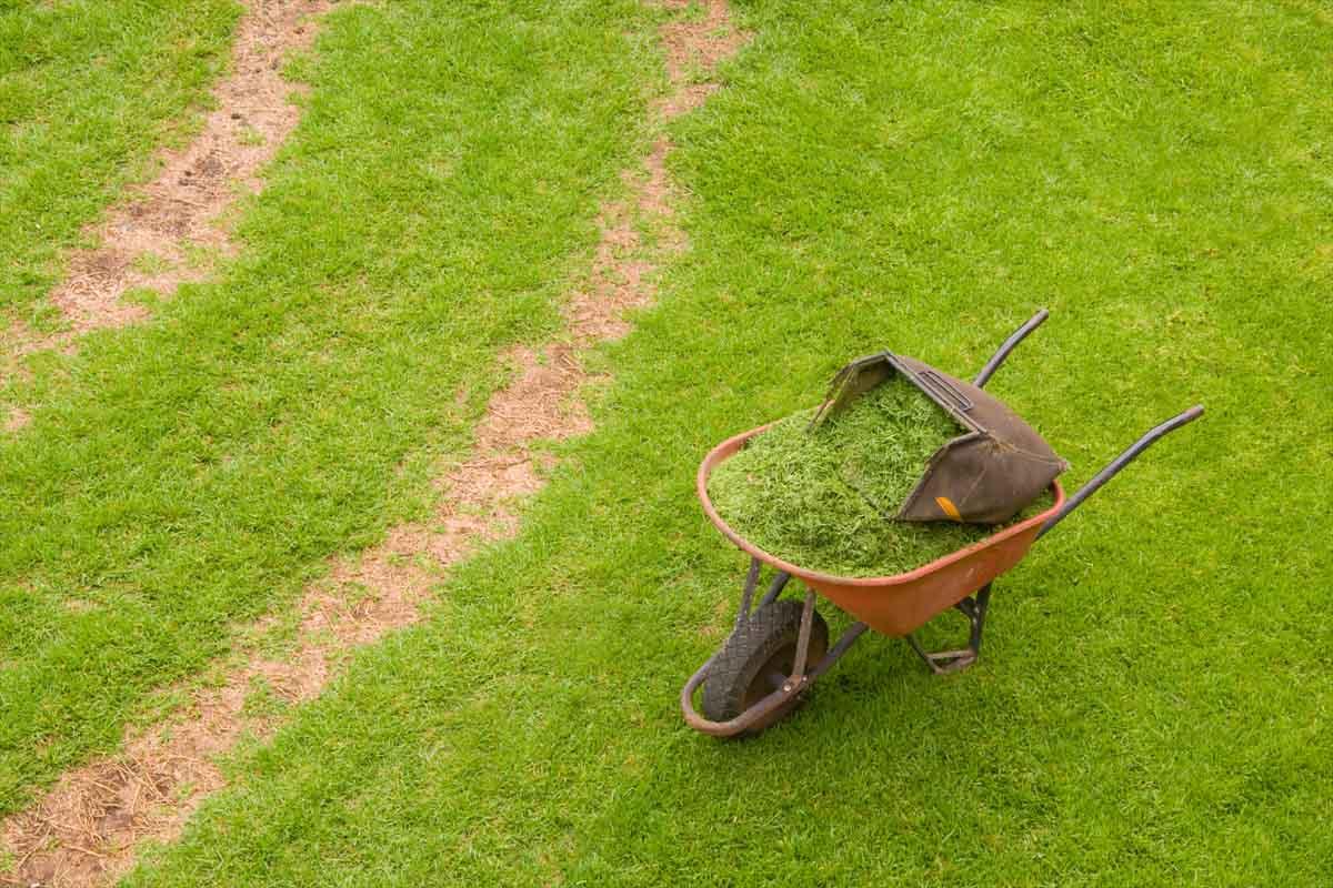 Lavoro Giardiniere Verona E Provincia