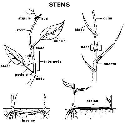 Identify Lawn Weeds With Authoritative Resources