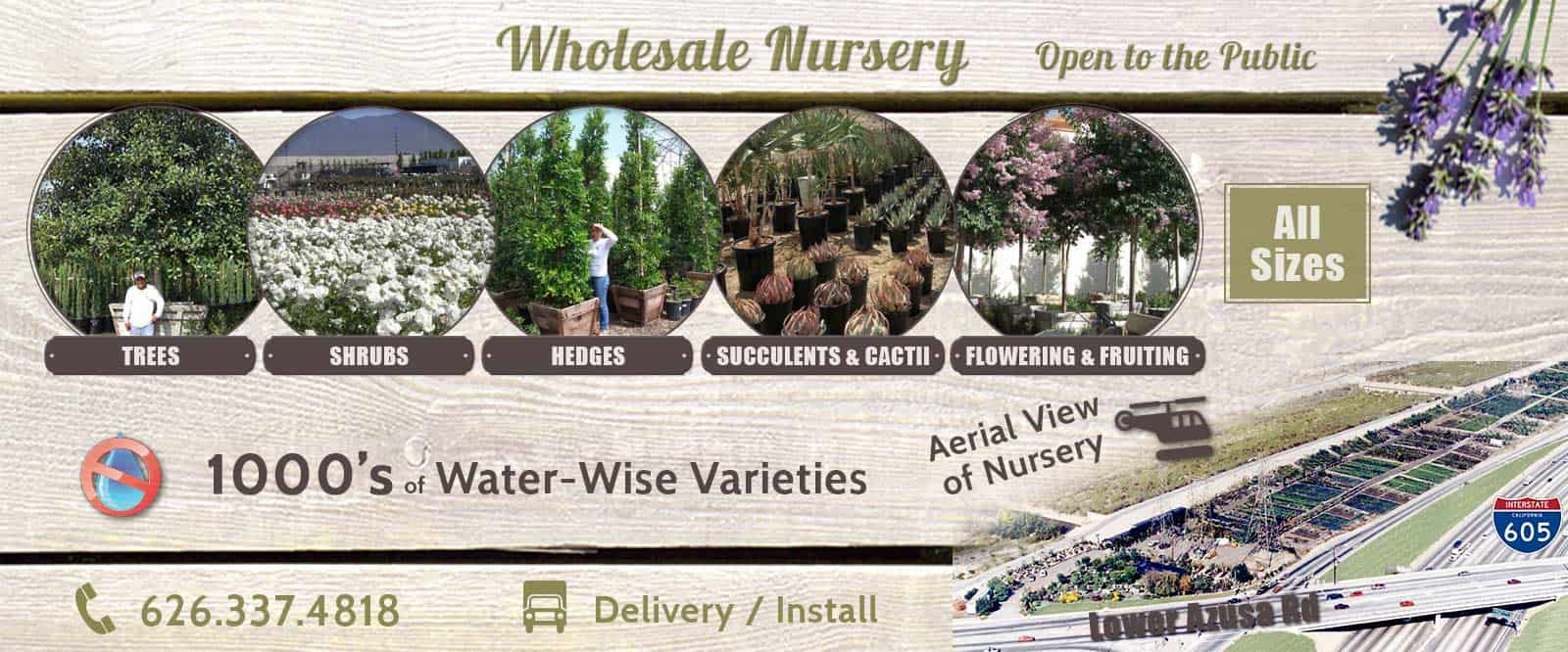 Wholesale and Retail Plants / Trees