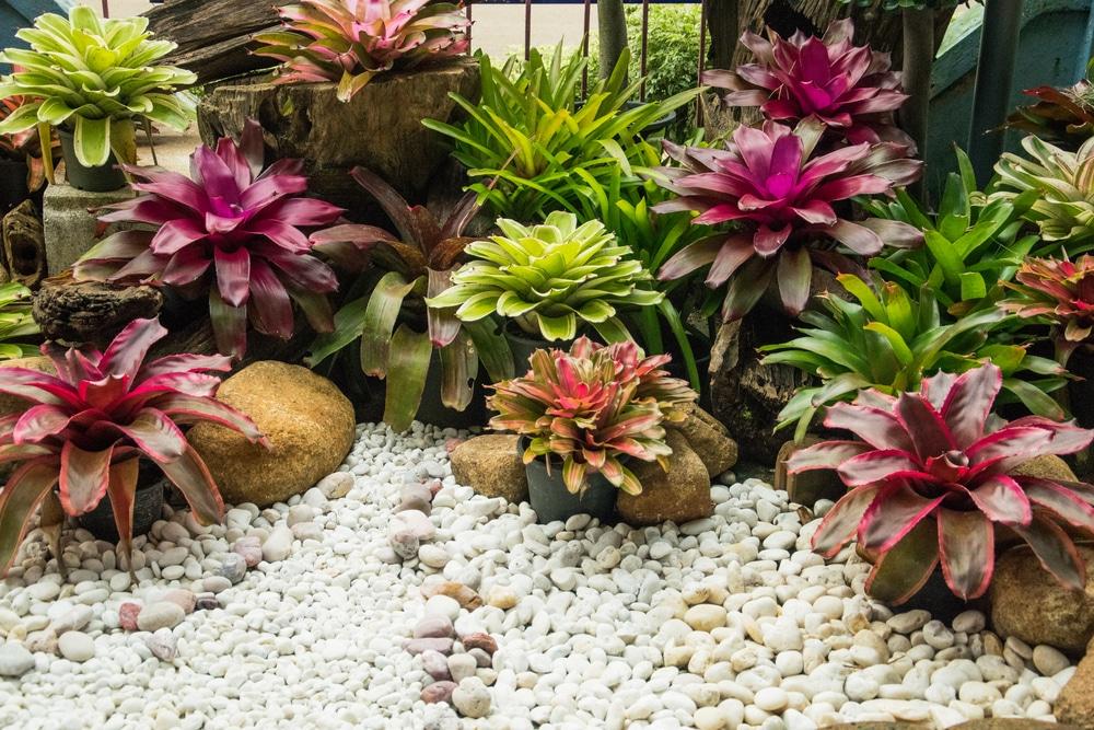 Houseplants Can Grow Water