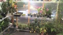 Keeping Greenhouse Cool In Summer - Garden &