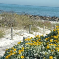 Outdoor Kitchens Plans Granite Kitchen Sink Hardy Coastal Plants | Sa Garden And Home