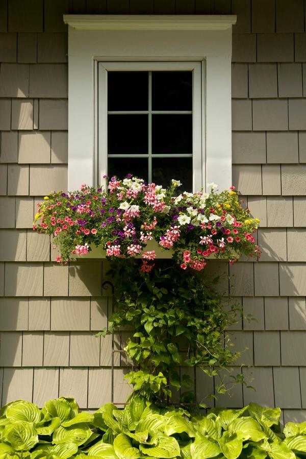 Flowers to Plant in Window Box