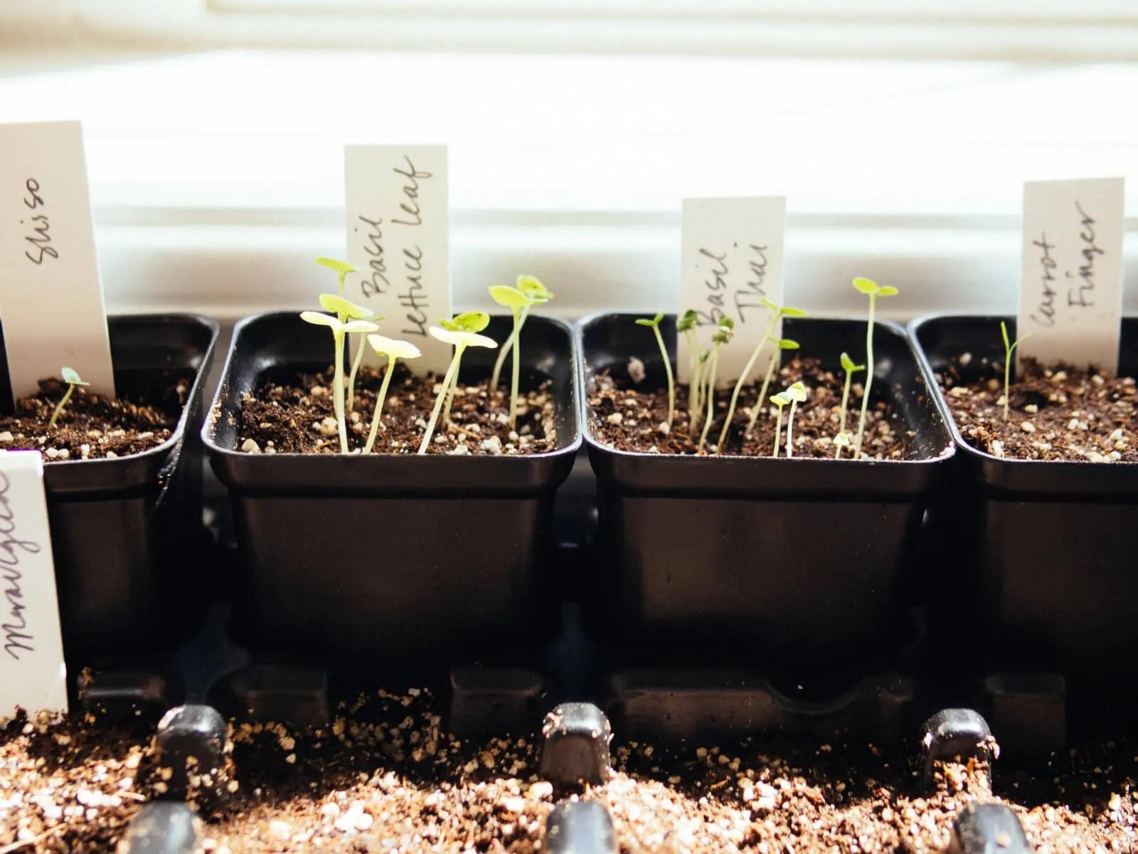 Planter Box Vegetable Garden