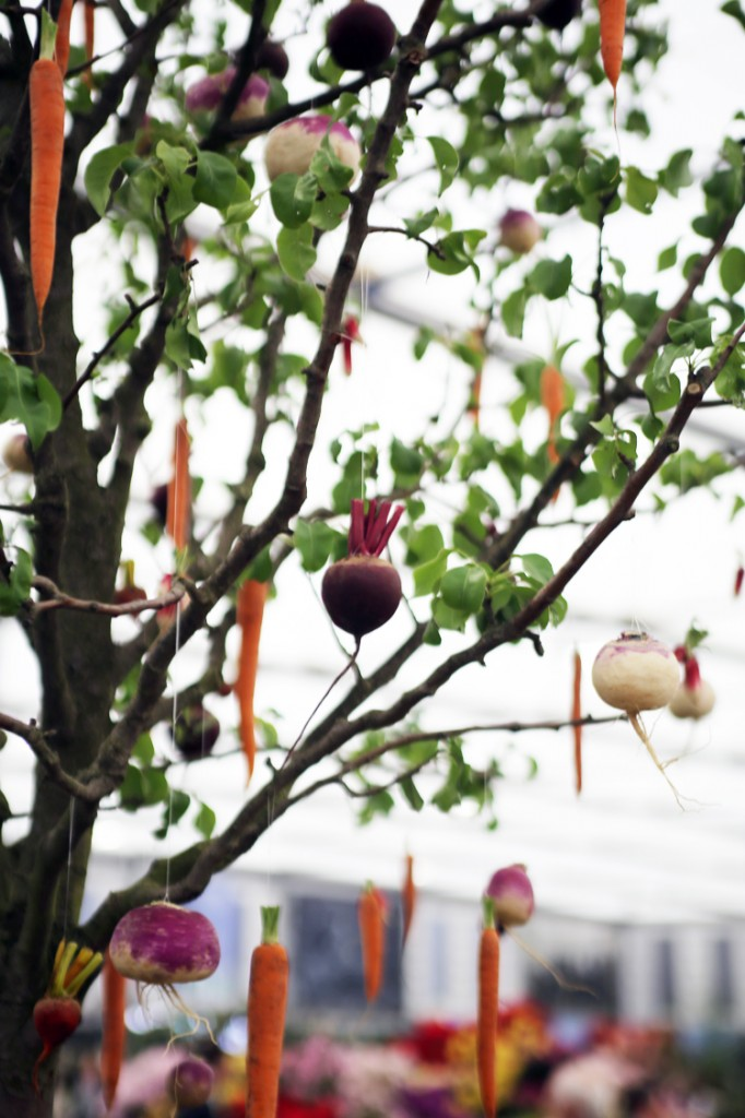 carrot tree