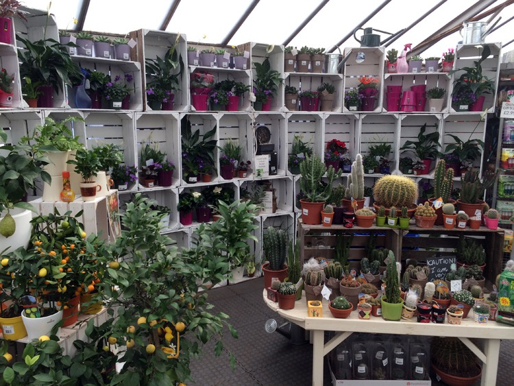 The Garden Centre Blog - Fantastic Houseplants - Ferndale Garden Centre 1